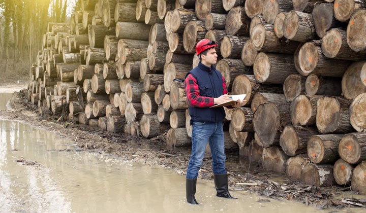inspector examining fresh wood logs