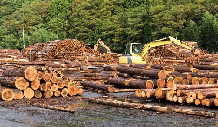logs by water at lumber mill