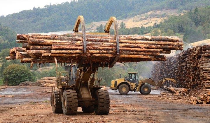 lumberyard truck loading log pile at yard